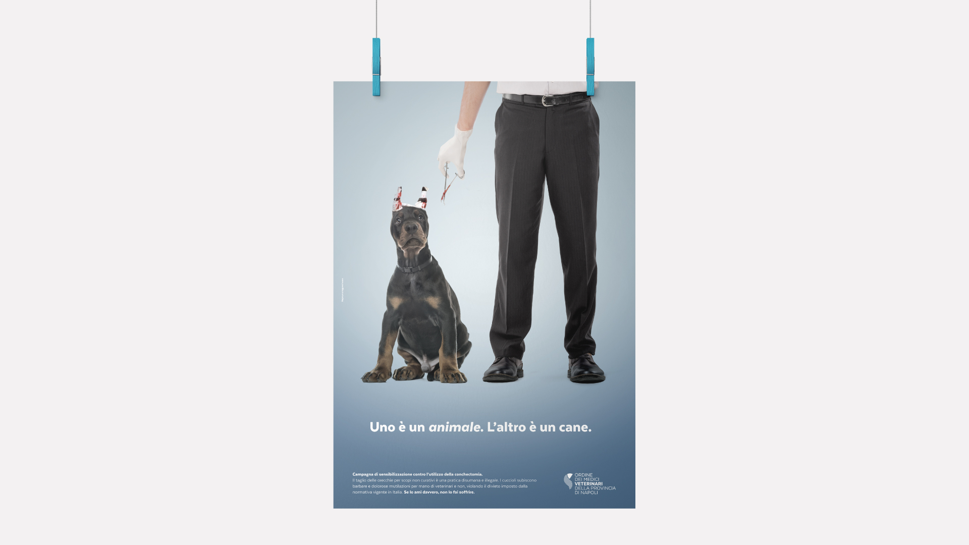 pubblicità ordine dei medici veterinari