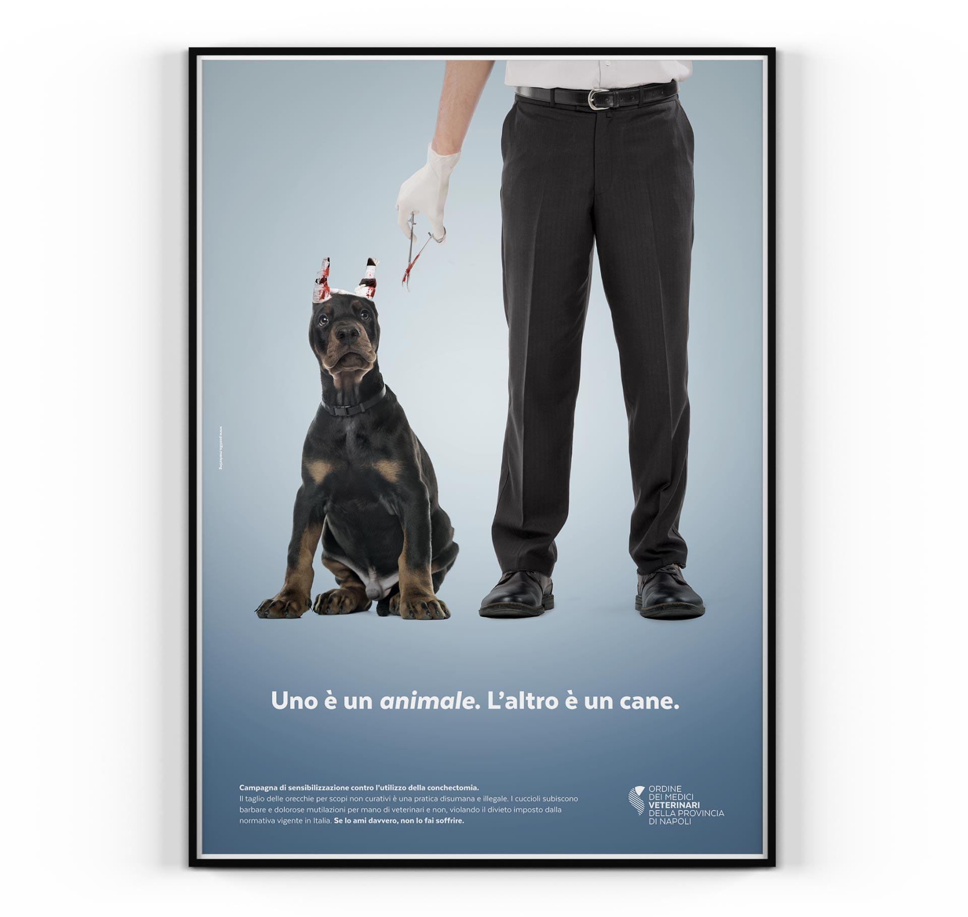ordine dei medici veterinari ads